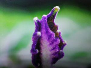 Violettes-BLatt-300x225 in Aurareinigung und Chakraharmonisierung